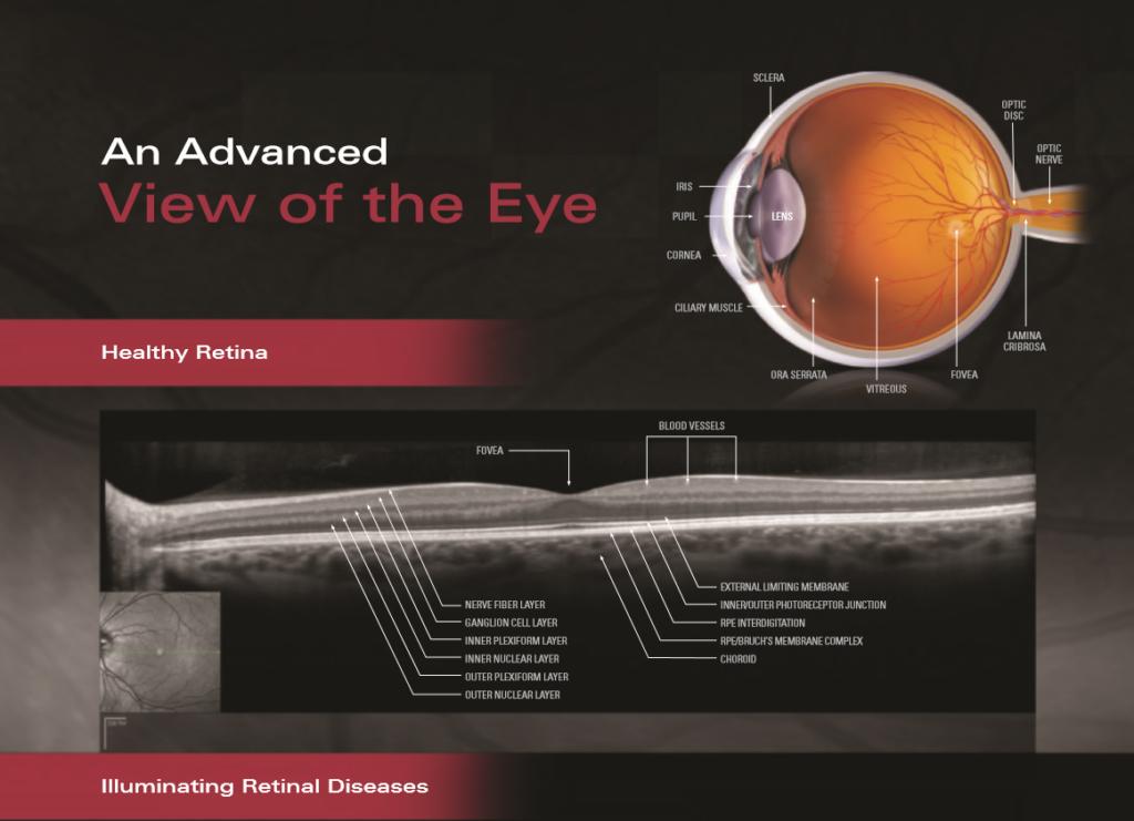 The Retina Layers